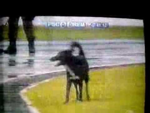 cachorro3